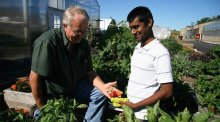 Older man handing younger man some harvested produce